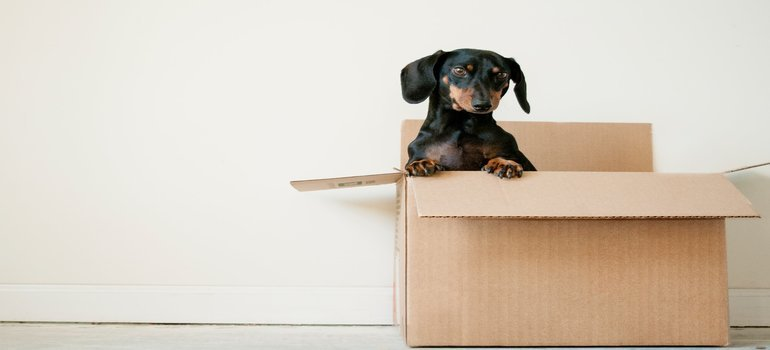 -a dog in a moving box