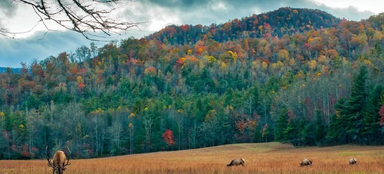 A meadow near mountains in North Carolina.