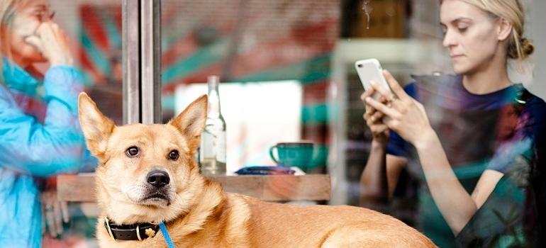 a dog at a restaurant