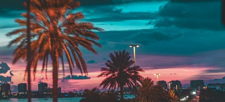 palms in Tampa