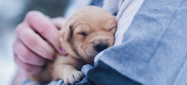 A man holding a puppy
