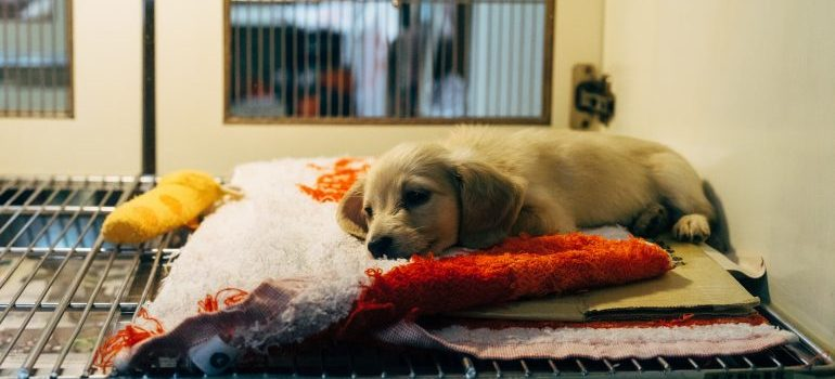 puppy at the veterinary center